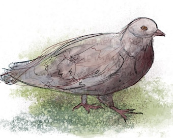 Collared Dove printable digital painting