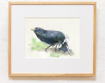 Satin Bowerbird printable watercolour painting