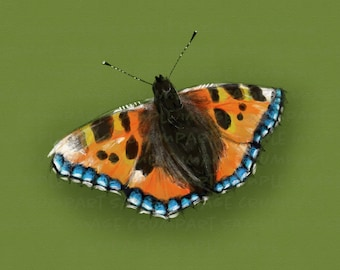 Tortoiseshell Butterfly printable digital painting