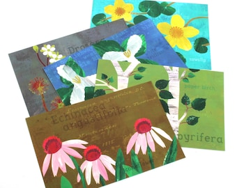 Artist Postcard Set, Minnesota Native Species, Medicinal Plants, Flower Illustration Postcards, Woodland Floral Postcards, Set of Five