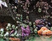 Starfish, Anemone, Ocean Print, Mermaid, Sea, Nature Photography, Travel, Nature Print, Oregon, Fine Art Print 8x10