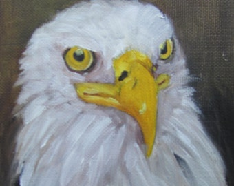 Bald Eagle  portriat  Bird Barbara Haviland Texas Artist