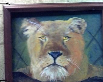 The Lioness, wildlife, lion, oil painting, Barbara Haviland, Barbsgarden