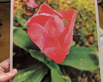Moist Tulip Print