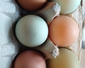 1 Half Dozen Farm Fresh Organic EGGS shipped fresh to your door