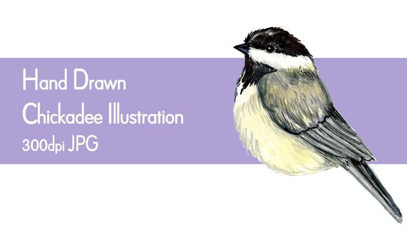 Chickadee clip art chickadee illustration printable PDF JPG image 1