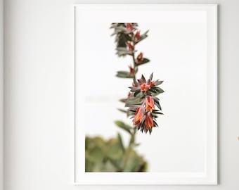 Succulent Print, Summer Succulent #1, Botanical Art, Floral Print, Nature Photograph, Garden Print, Flower Print, Cactus Print, Desert Art