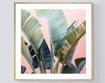 Palm Tree Print, Tropic Pink #3, Banana Tree Art, Banana Leaf Print, Fine Art Print, Tropical Decor,  Botanical Art Print, Florida Art Print