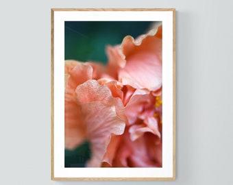 Hibiscus Print, Flower Photograph, Pink Print, Floral Art Print, Botanical Art Print, Floral Photo, Hibiscus Art, Flower Art, Floral Decor