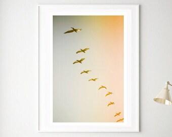 Pelican Print, Bird Art, Updraft #2,  Bird Print, Nature Photography, Coastal Decor,  Animal Art, Beach Decor, North Carolina Art Print