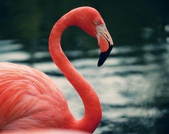 Flamingo Print, Bird Print, Feather Art, Flamingo #14, Animal Print, Nature Photograph, Pink Art, Oversized Print, Alicia Bock Photography
