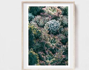 Succulent Print, Botanical Print, Flower Art, Garden Print, Mornings In The Succulent Garden #1, Alicia Bock, Floral Art, Oversized Print