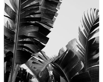 Palm Tree Print - Black and White Photograph - Tropical Art - Travel Photograph -No. 12- Tropical Print -California - Florida - Oversize Art