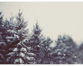 Woodland Art - Winter Photograph - Snow Photography - Winter Daydream #2 - Pine Tree - Snow Art - Winter Print - Michigan Art - Winter Art