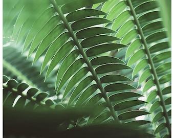 Palm Tree Print, The Green Light, Tropical Art Print, Fine Art Print, Tropical Decor, Botanical Art Print, Florida Art Print,Green Art Print