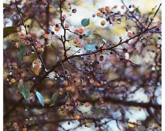Tree Photograph - Nature Photography - Autumn Art - Fine Art Photography - October Morning - Autumn Art - Fine Art Photograph - Alicia Bock