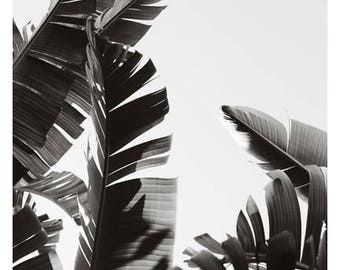Palm Tree Print - Black and White Photograph - Tropical Art - Travel Photograph - No. 2- Tropical Print -California - Florida - Oversize Art