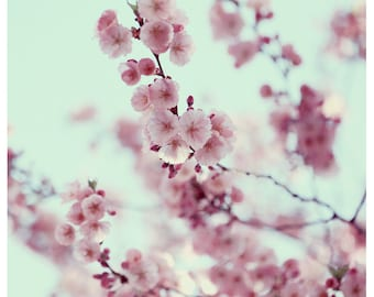 Flower Photograph - Nature Photography - Pink - Parasol  -  Spring - Cherry Blossom - Bloom - Fine Art Photography