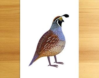 California Quail State Bird 5x7 Art Print Illustration