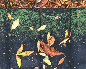 Fall leaves with green moss
