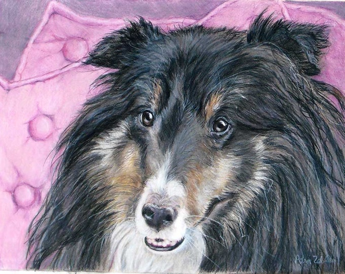 Shetland Sheepdog Artwork, Custom Pet Portrait Drawing by Artist Robin Zebley
