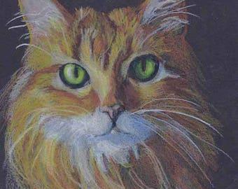 Dramatic Custom Pet Portrait Drawing on Black Paper by Artist Robin Zebley