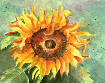 Sunflower in watercolor
