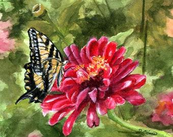 Tiger Swallowtail Butterfly & Zinnia