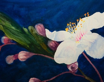 White Blossom Watercolor Painting