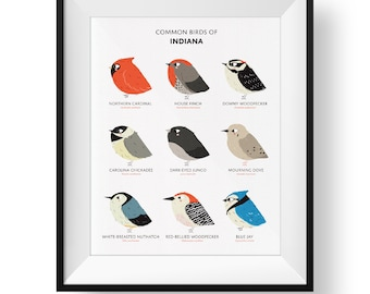 Common State Birds of Indiana Art Print • Illustrated Chubby Bird Print • Indiana Field Guide