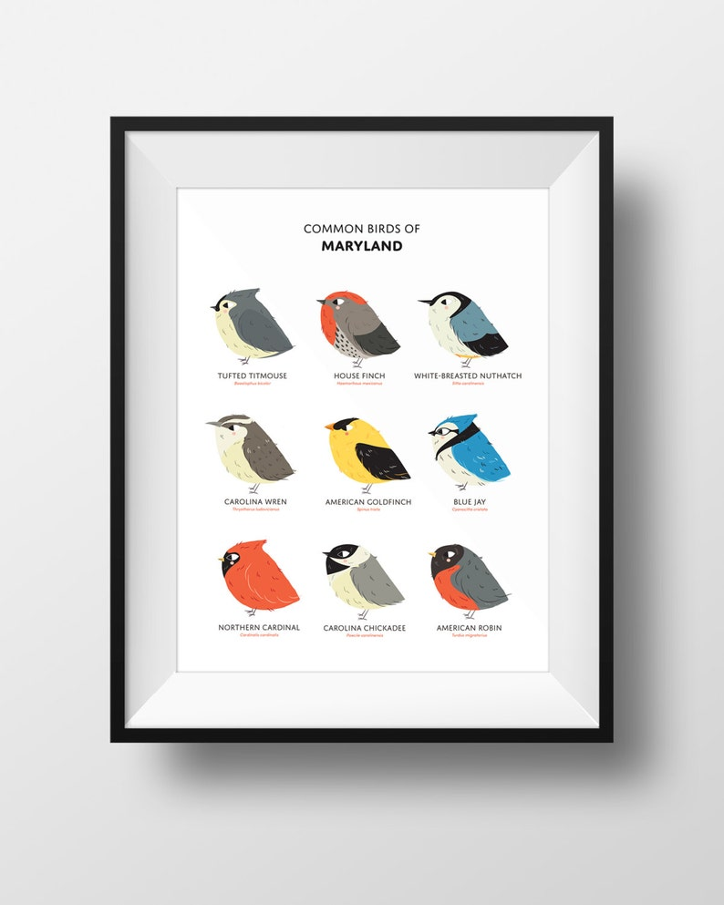 Common State Birds of Maryland Art Print  Maryland Field image 0