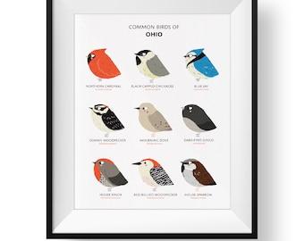 Common State Birds of Ohio Art Print • Illustrated Chubby Bird Print • Ohio Field Guide