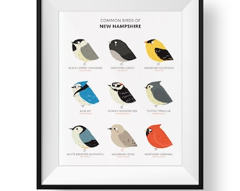 Common State Birds of New Hampshire Art Print • Illustrated Chubby Bird Print • New Hampshire Field Guide