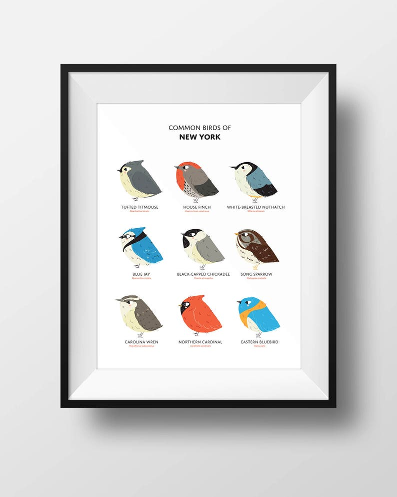 Common State Birds of New York Art Print  New York Field image 0