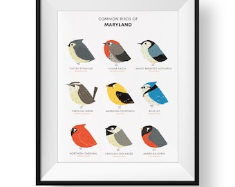 Common State Birds of Maryland Art Print • Maryland Field Guide • Cute Chubby Bird Art
