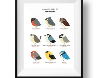 Common State Birds of Tennessee Art Print • Tennessee Field Guide • Cute Chubby Bird Art