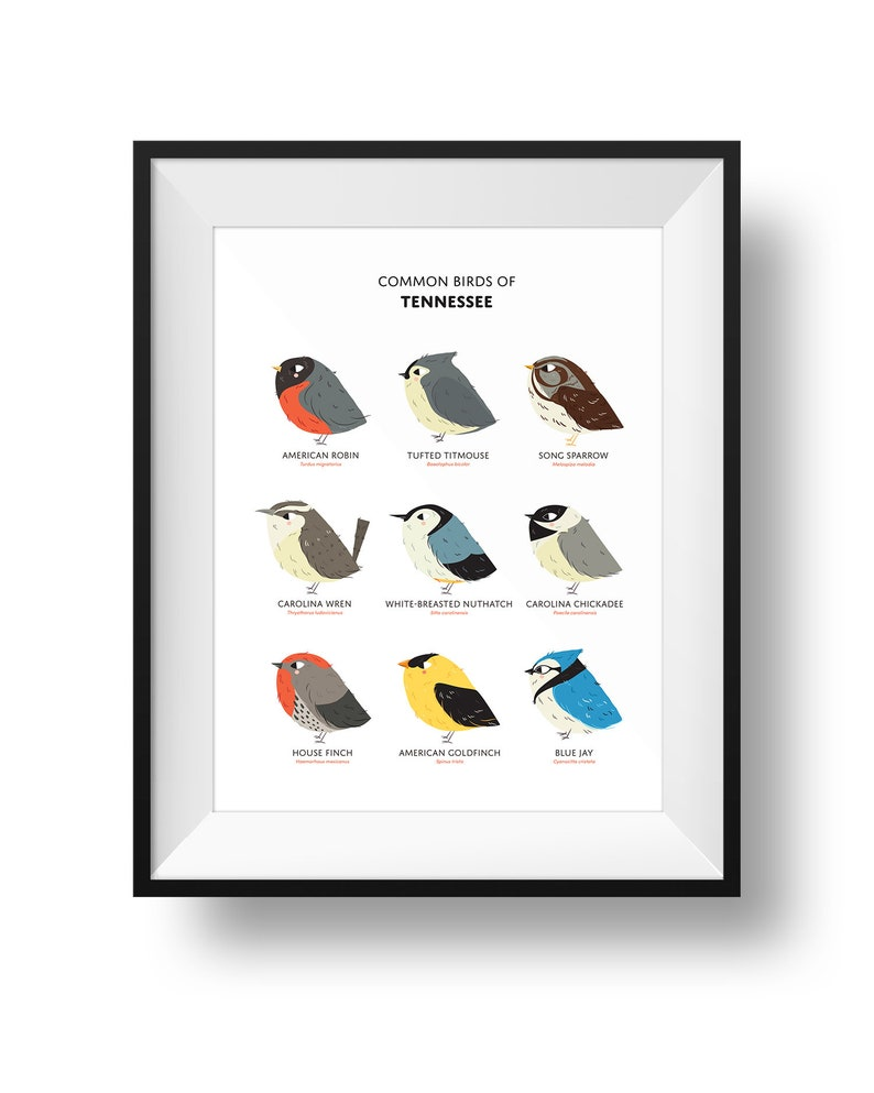 Common State Birds of Tennessee Art Print  Tennessee Field image 0