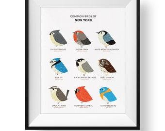 Common State Birds of New York Art Print • New York Field Guide • Cute Chubby Bird Art
