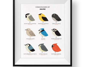 Common State Birds of Maine Art Print • Illustrated Chubby Bird Print • Maine Field Guide