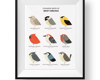 Common State Birds of West Virginia Art Print • Illustrated Chubby Bird Print • West Virginia Field Guide