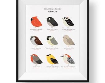 Common State Birds of Illinois Art Print • Illustrated Chubby Bird Print • Illinois Field Guide
