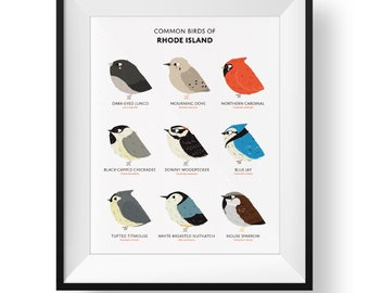 Common State Birds of Rhode Island Art Print • Illustrated Chubby Bird Print • Rhode Island Field Guide
