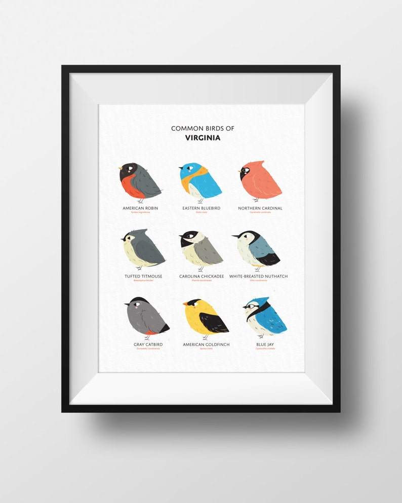 Common State Birds of Virginia Art Print  Illustrated Chubby image 0