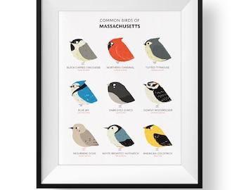 Common State Birds of Massachusetts Art Print • Illustrated Chubby Bird Print • Massachusetts Field Guide