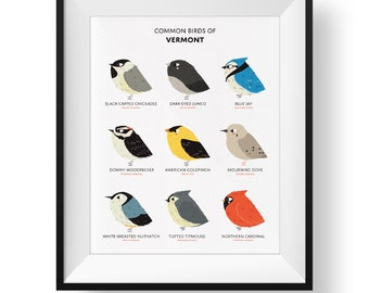 Common State Birds of Vermont Art Print • Illustrated Chubby Bird Print • Vermont Field Guide