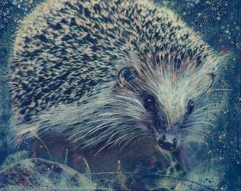 Mushroom the Hedgehog Greetings/Note Card