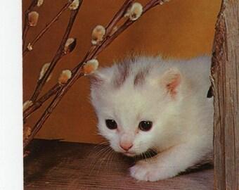Kitten * Pussy Willows * Photo * Vintage Postcard