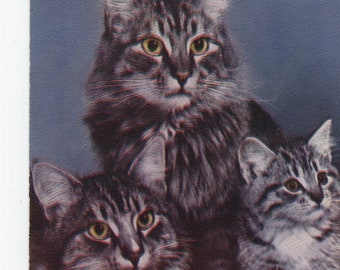 The Family * Maine Coon Cat * Photo * Vintage Postcard