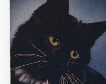 Sultan * Black Cat * Photo * Vintage Postcard