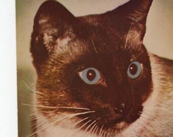 Siamese Cat * Photo * Vintage Postcard